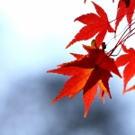 The Bristol Grandparents Support Group – Autumn Leaves
