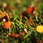 The Bristol Grandparents Support Group – Autumn Leaves 2