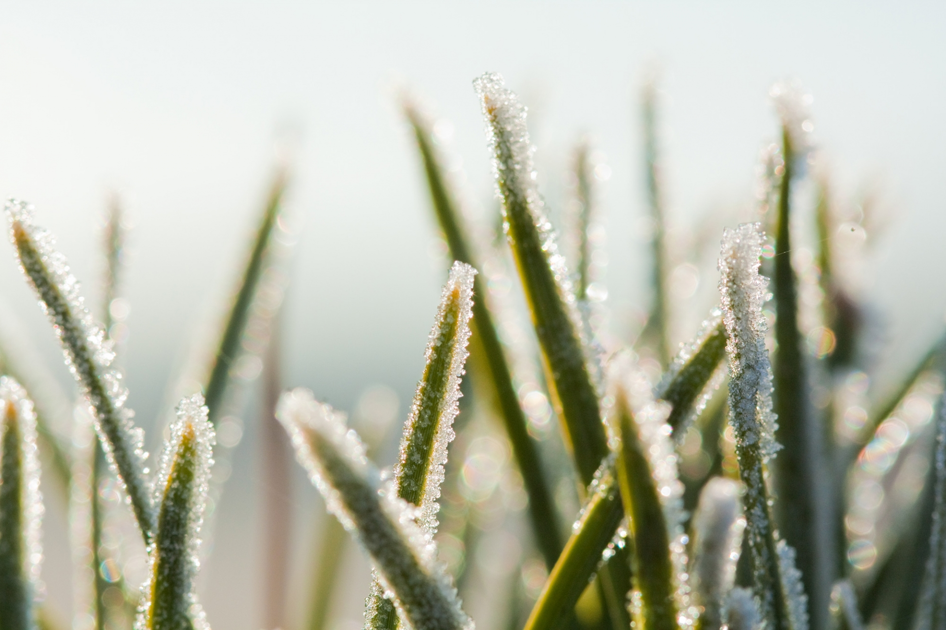 The Bristol Grandparents Support Group – Winter Frost